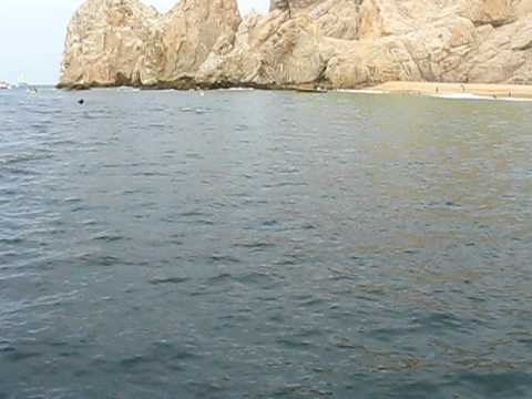 Manta Ray Jumping Manta Rays Jumping in Cabo San