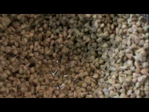 How To Sprout Raw Buckwheat Groats, Ep239