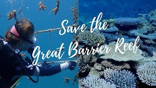 Save the Great Barrier Reef | Reef Restoration Foundation