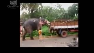 Whatsapp Funny Viral Video Collections