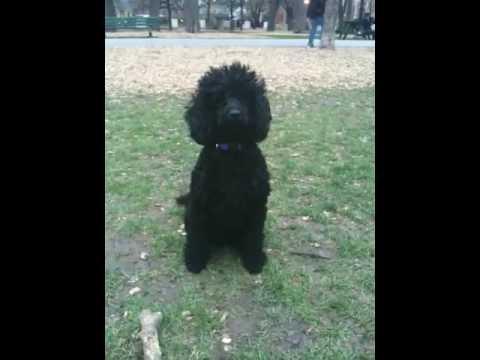 Black Dog Park