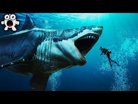Top 20 Largest Sea Creatures that EVER Existed!