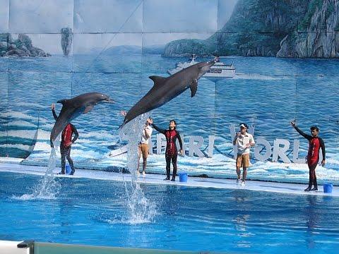 Dubai Zoo | Visit Dubai Zoo Tour | Dubai Zoo Travel Videos Guide