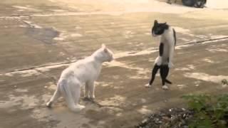приколы с животными, смешные приколы, смотреть приколы онлайн, видео про котов