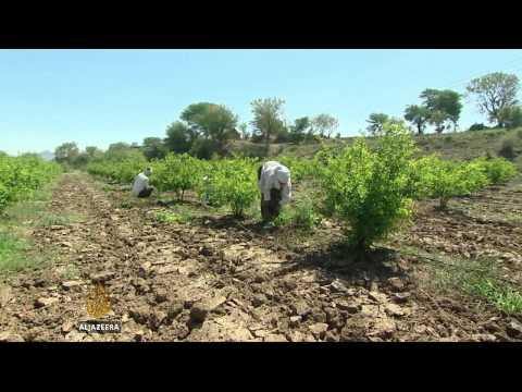 Crop failure behind India farmer suicides