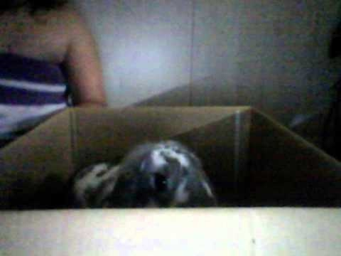 FAMUSE BUNNY .wmv Video
