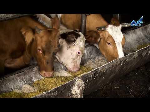 Успешное КФХ: семья Эркеновых стала одной из образцовых фермерских семей в КЧР