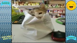 Animali divertenti. Funny Animals.🐩🐈 Funny Pet Animals' Life Videos march 2020.🐷🐱 Try Not To Laugh.7
