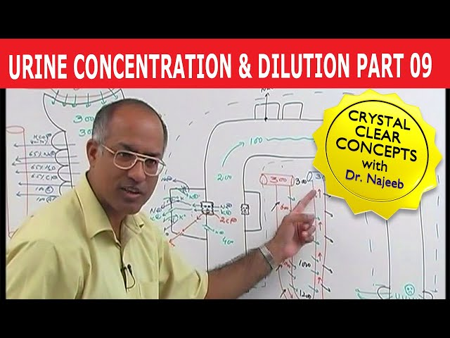 Urine Concentration and Dilution 9/13