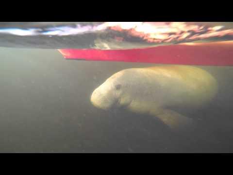 Famagogo-Manatee Paddle
