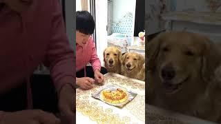 Những Chú Chó Hài Hước Vui Nhộn Nhất   I Tý Chuột