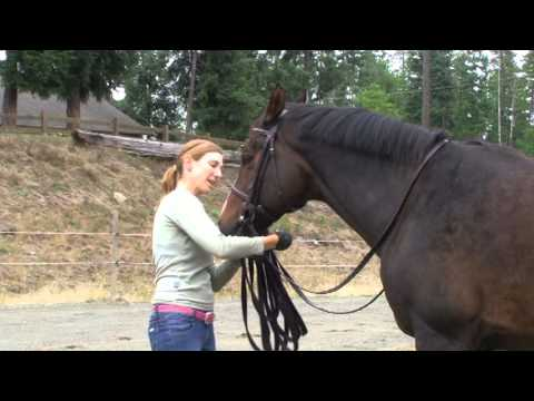 Tips For Lunging With a Bridle