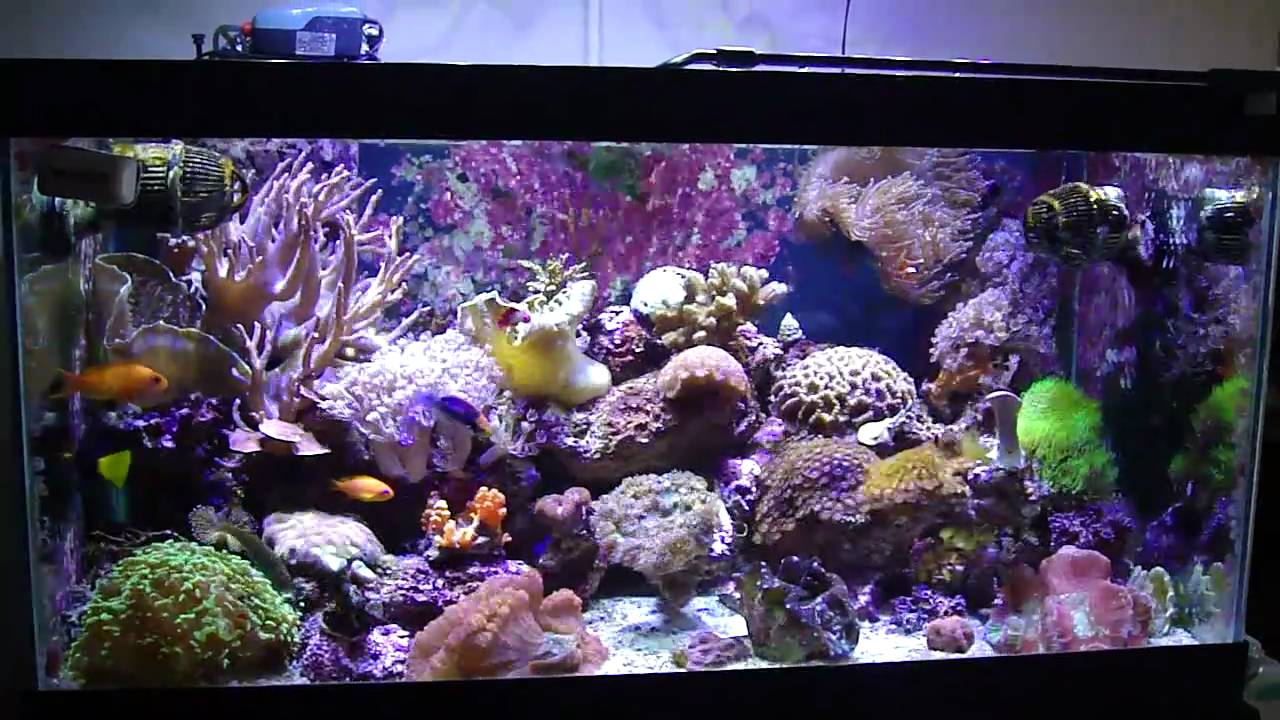 50 gallon reef tank youtube for 50 gallon fish tank