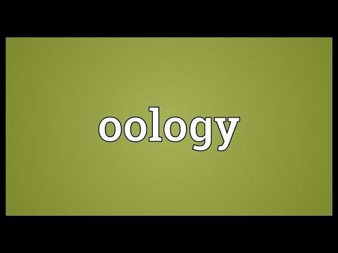 Header of oology