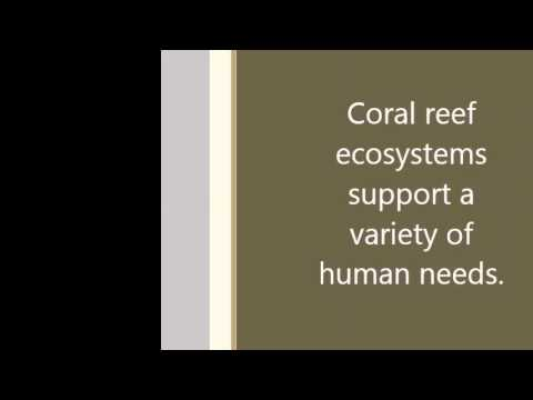 Importance of coral reefs in the Caribbean