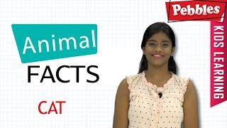 Interesting Animal Facts : Cat | Cat Essay English | Cat Quiz | Cat Song | Cat Story | Learn Animals