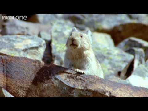 Funny Talking Animals - Walk On The Wild Side - Episode One Preview - BBC One