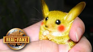 REAL LIFE PIKACHU CAPTURED - real or fake?