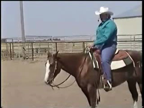 Horse Training Videos Free Lessons: How to Train Horses