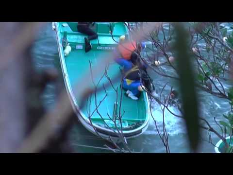 Taiji, Japan - Bottlenose dolphin thrashes during capture