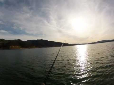 Go Pro Lunker Punker Swimbait Castaic Lake Striper Action