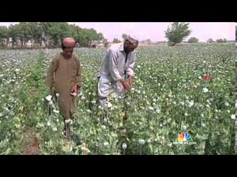 Opium Production Hits Record High In Afghanistan