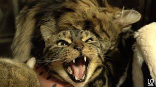 Osamu the cat is rambunctious boy. =^._.^= ??????????????