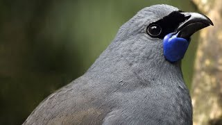 The World's Most Beautiful Bird Songs