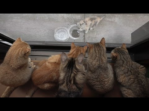 11 cats? 10 cats can't stop thinking about stray cat  野良仔猫が気になって仕方がない猫たち