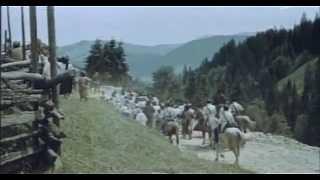 Камінна душа (1989) ( Ukrainian film )