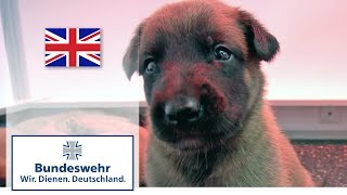 A puppy's first days - shepherd dogs bred by the Bundeswehr