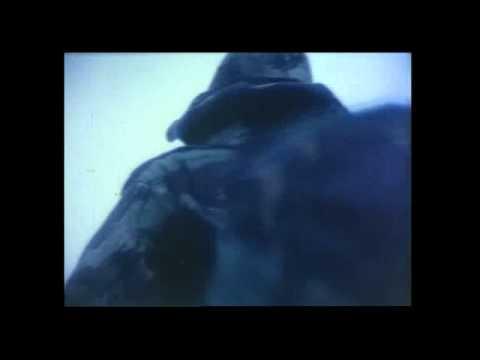 Falklands War 1982...San Carlos