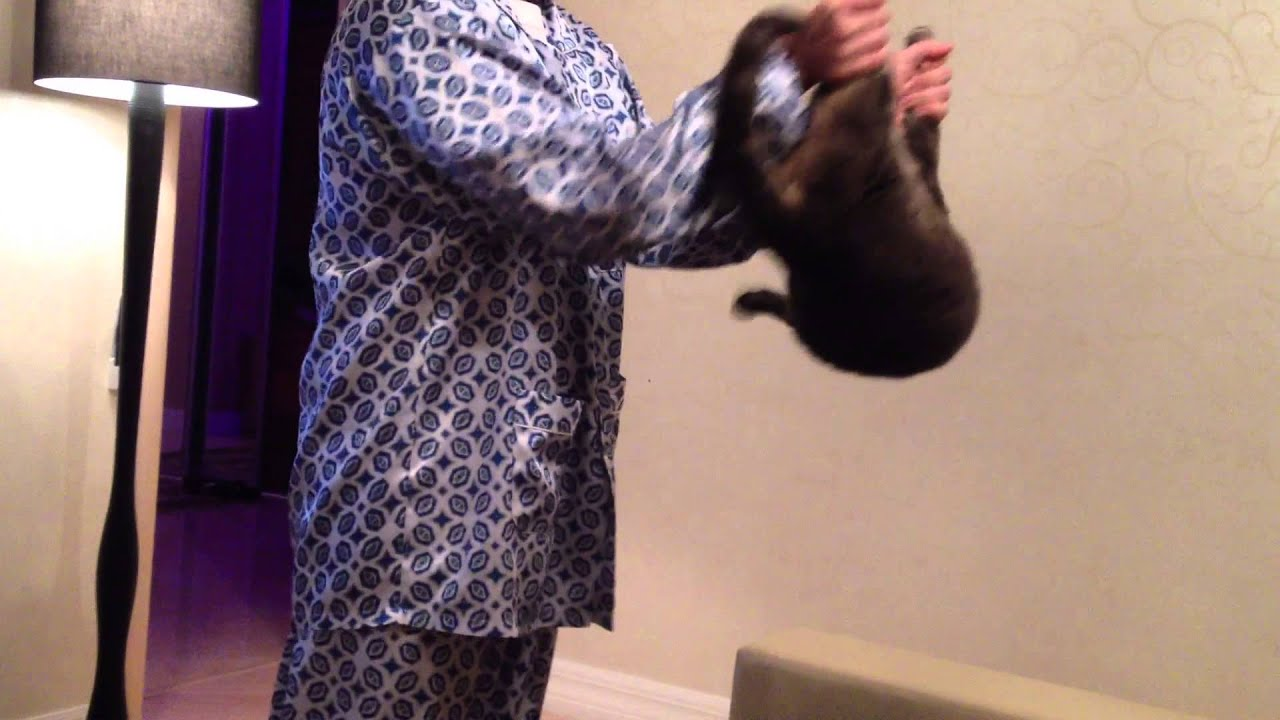 Reflex Cats Cat Righting Reflex