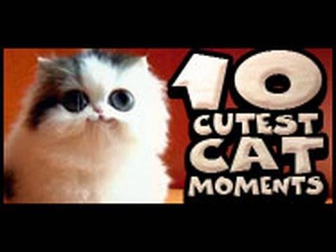 10 Cutest Cat Moments Music Videos