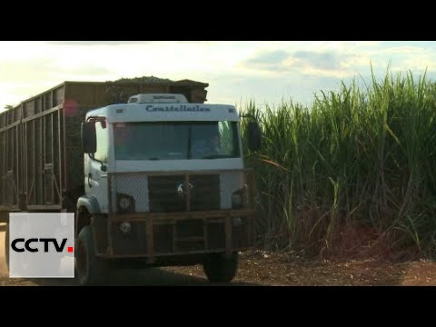 India Economy: Severe drought sours sugar sector
