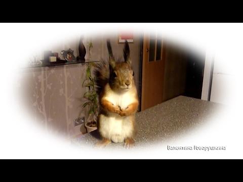 Baby squirrel Noble.. День рождения Нобеля. 2 часть. 出生日 Nоble