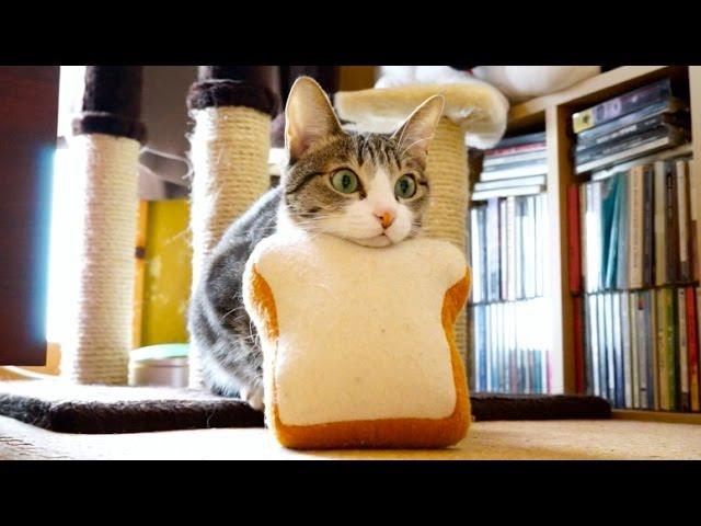 パン猫ミサイル - Bread Cat Missile -