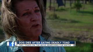 Family dog dies after eating deadly toad