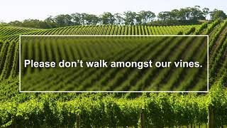 Please don't walk amongst our vines