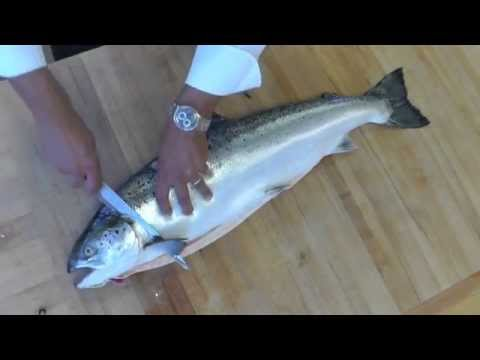 How to butcher whole salmon- How to Fillet a fish-How to debones salmon-How to clean salmon