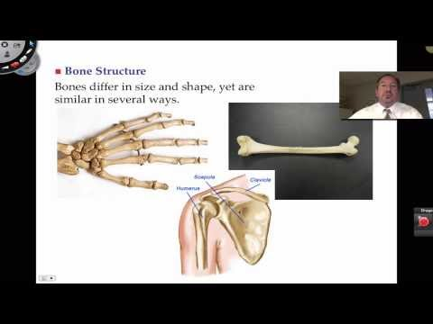 """a p bone structures Endosteum f medullary cavity 34% 1 end portion of a long bone 6 5 scientific term for bone shaft 5 fl 2 helps reduce friction at joints + 6 ___ contains yellow marrow in l adult bones k"""" 3 site of blood cell formation d 0/ h 7 growth plate remnant %—l—— 4 major submembranous sites of osteogenic cells (two responses from key) review."""