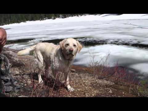 Annabel plays in icy Munro Lake, Burke Mountain, Coquitlam, BC