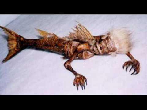 Mermaid Found in Porbandar, India--- All Fake