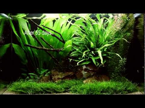 Layout 63 - by Tropica