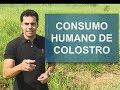 Colostro bovino é liberado para o consumo humano no Brasil