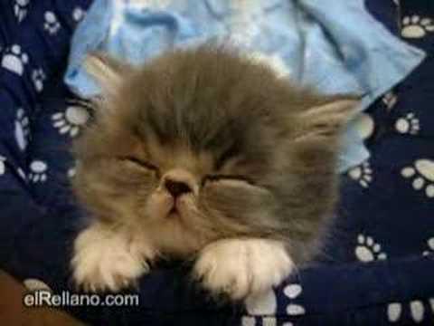 Siesta de gatito