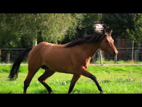 Pferd (Arthrose) – Hilfe bei Spat/Arthritis