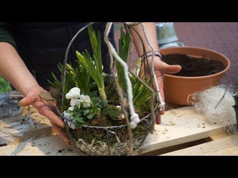 DIY: Der Frühling im Körbchen - Gartencenter Mencke