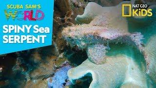 Spiny Sea Serpent | Scuba Sam's World