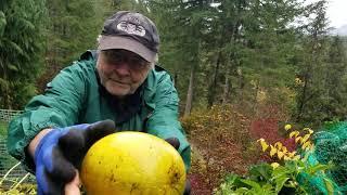 Thu hoạch ớt ngọt và củ cải mỹ,  o nhà bác hàng xóm,Washington